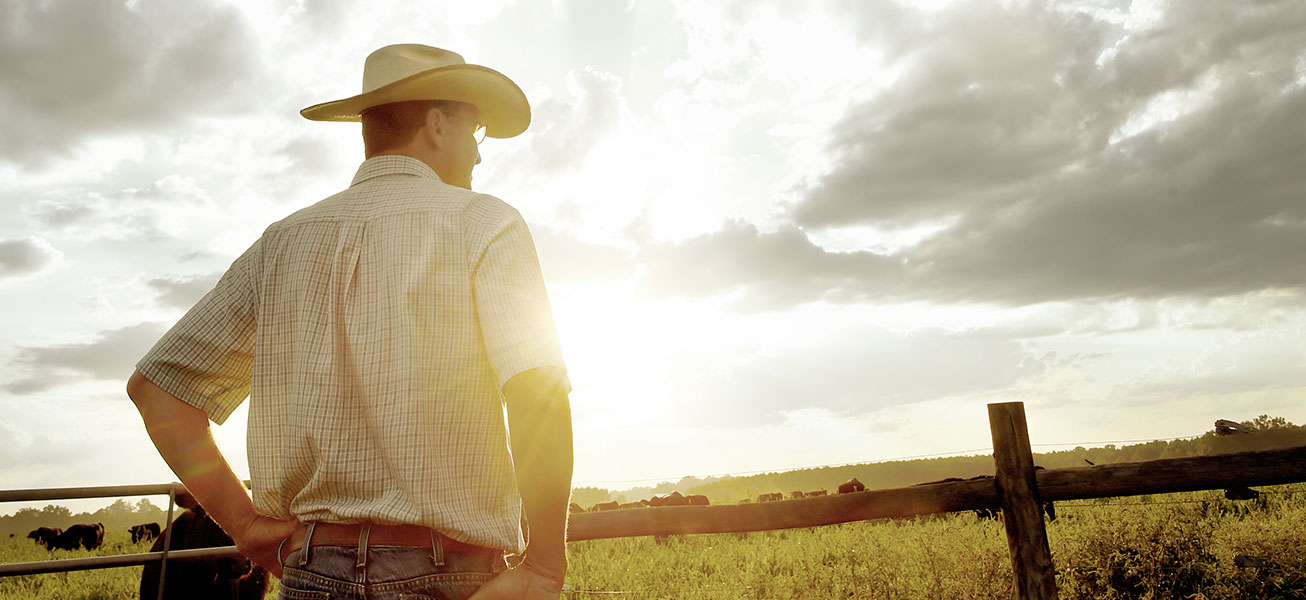 Rancher Looking at Cattle Field